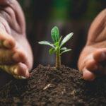Bijdragen aan een rijke bodem